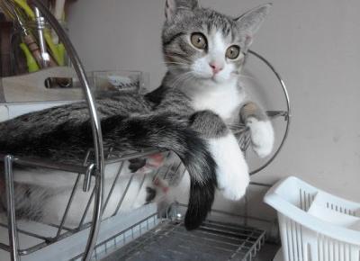 Koci punkt widzenia: krótki poradnik, jak tresować kota (przygotuj się na najgorsze!)