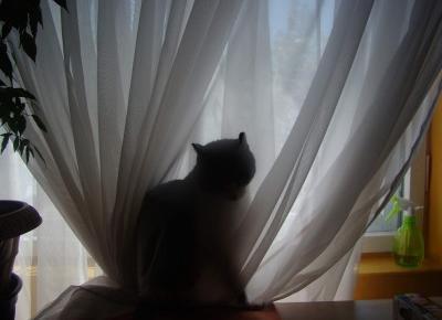 Koci punkt widzenia: Dziwne nawyki kotów