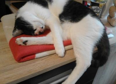 Koci punkt widzenia: Pożegnanie z Kotem - ale nie na zawsze
