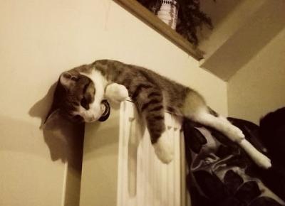 Koci punkt widzenia: Jak sprawić, by kot dobrze się czuł w chłodne dni?