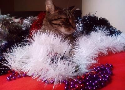 Koci punkt widzenia: Koty vs Choinka | Blogmas