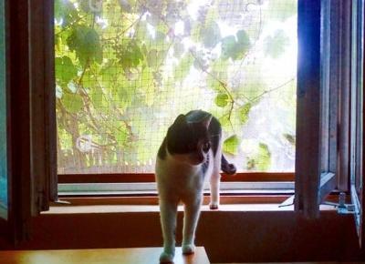 Koci punkt widzenia: Jestem dorosłym, poważnym kotem