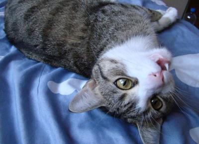 Koci punkt widzenia: Jak kot okazuje miłość?