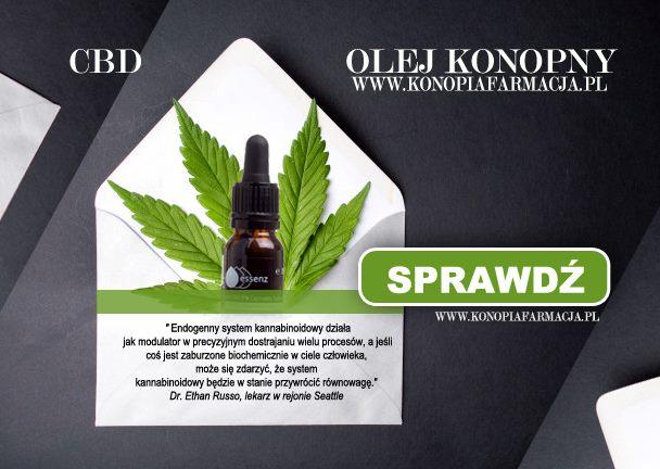 olej CBD 5 % essenz - Zainteresowanie endokannabinoidami