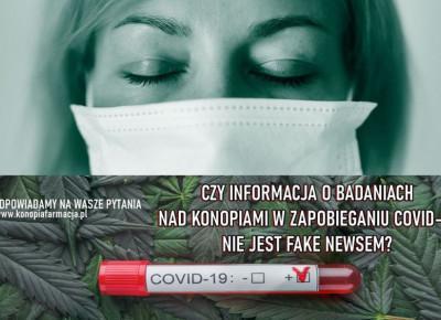 Badania nad konopiami w zapobieganiu COVID-19. Prawda czy fake-news?