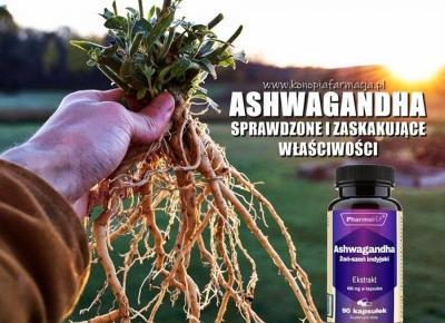 Ashwagandha - sprawdzone i zaskakujące właściwości