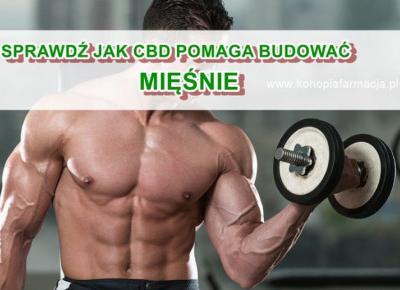 Jak budować mięśnie z CBD i olejem MTC.