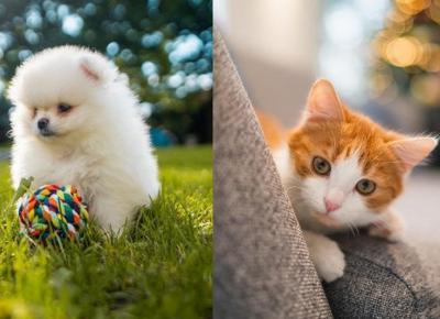 Instagramy zwierzaków Ekipy - znasz je?