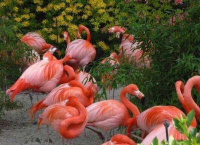 Najlepsze akcesoria dla fanów flamingów!