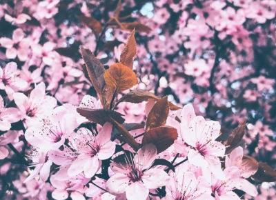 """Photographer Lifestyle on Instagram: """"Kwiatków to się chyba nikt tu nie spodziewał🤭 Ale nie o tym! Właśnie pracuję nad ostatnia sesją z @karolina.lemparty 😎 Także efekty…"""""""