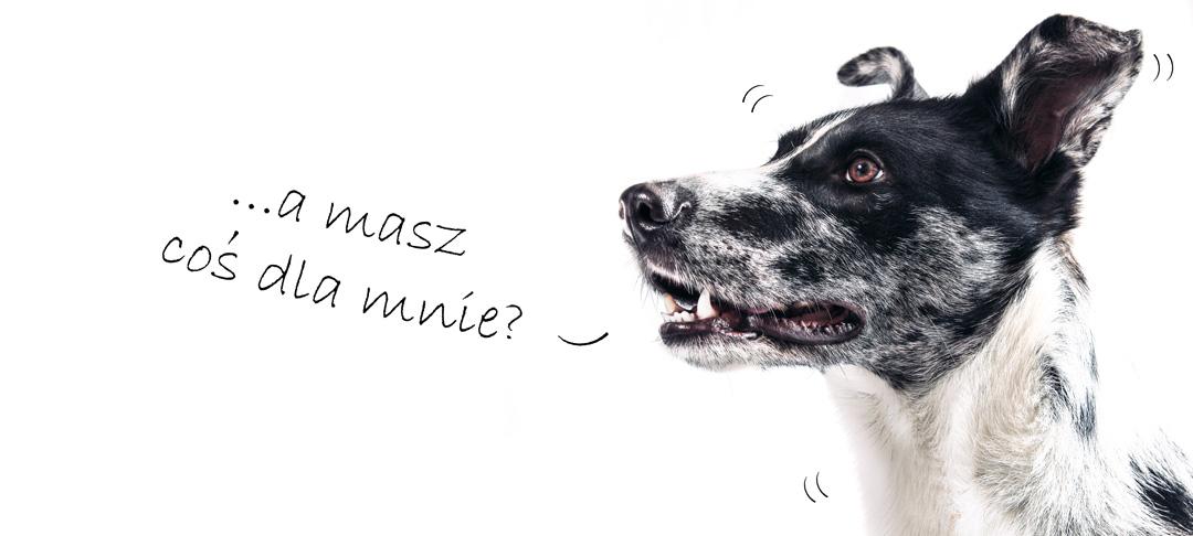 13 pomysłów na prezent dla psa... i dla Ciebie! #SmoczeSprawy 4