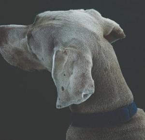 Prawda czy fałsz - pogromcy psich mitów. #SmoczeSprawy 3