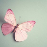 littlebutterfly