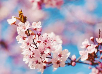 Ah ta wiosna... :)