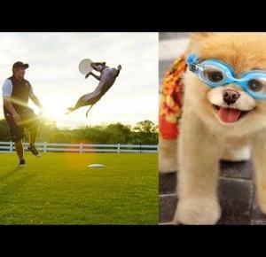 Niezwykłe Psy. Filmik z Dog Challenge w 4K