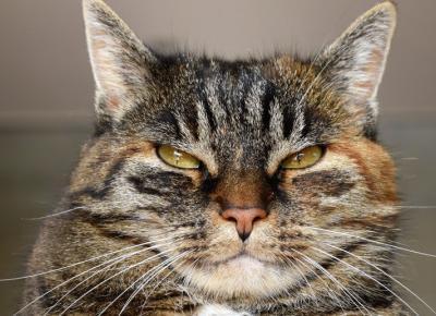 12 rzeczy, których nie wiecie o kotach