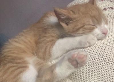 Kociak słodziak