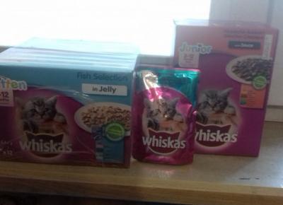 Czym karmić kota?