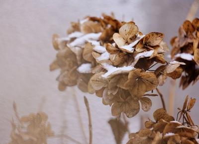 Łapacz Chwil fotografia: Winter captured | Kilka słów
