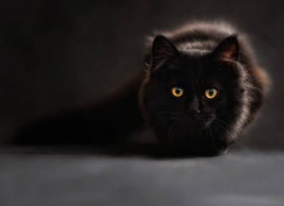 Purina Cat Chow - jak zostałam kocią mamą | matczysko