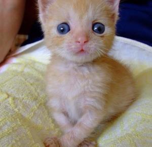 Zezowate koty dowodzą, że nie trzeba być perfekcyjnym, aby być kochanym