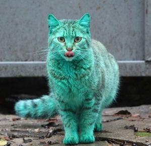 Zielony kot z Bułgarii