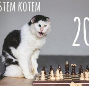 Kupując ten kalendarz, pomożesz chorym kotkom