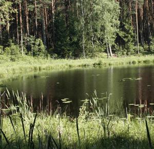7 dni w Borach Tucholskich – 12 przydatnych rzeczy, których nie zabrałem