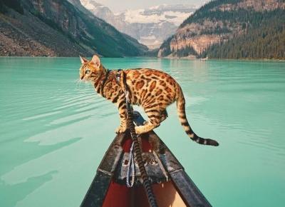 Kot podróżnik podbija Instagram!