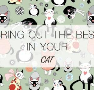 Bring Out the Best in Your Cat