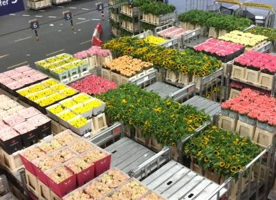 ONE DAY IN #FLORAHOLLAND – Invincible Lifestyle