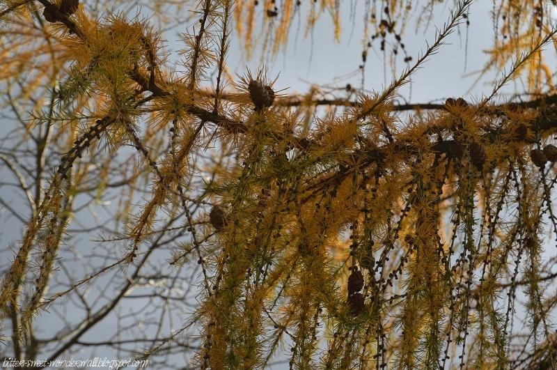 Mada-Blog: Autumn ♥