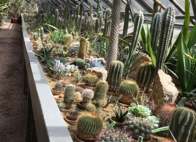#126 Botanical Garden of Wroclaw University || Ogród Botaniczny Uniwersytetu Wrocławskiego - My Vogue
