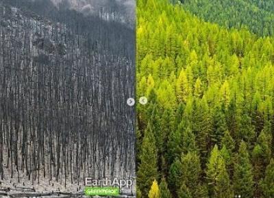 Ekologiczny następca FaceApp!