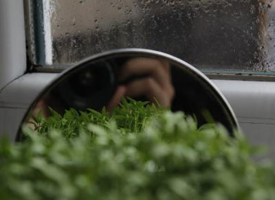 Nicole's blog: Oda do roślin | poezja