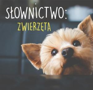 Słownictwo: Zwierzęta | niemiecka-inspiracja.pl