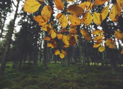 Przegląd Filmowy 01: filmy idealne na jesień ⋆ Oh My Blog