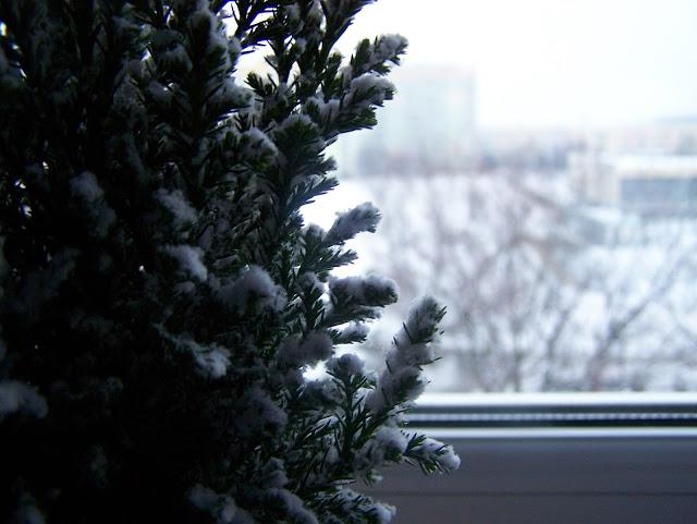Aleksandra Blog: Postanowienia noworoczne mają sens?