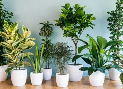 Idealne rośliny na słoneczne stanowisko!