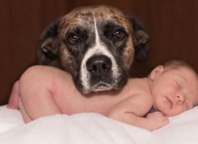TOP 7 Faktów, Dla Których Warto Mieć Psa