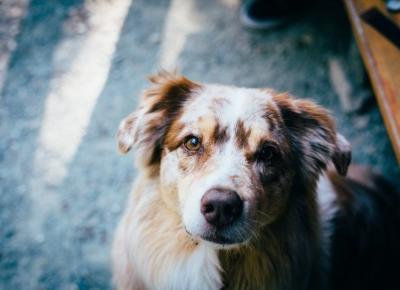 Co jest potrzebne aby adoptować psa?