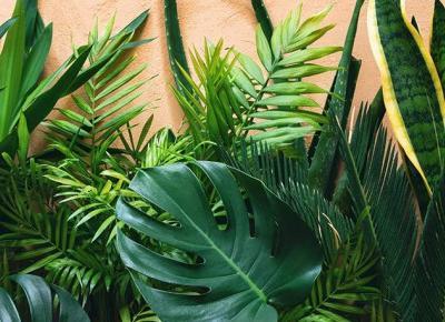 Masz w domu zacieniony parapet? To rośliny dla ciebie!