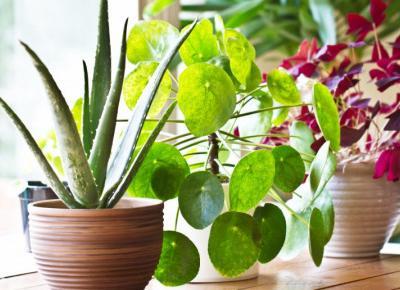 Dlaczego warto mieć rośliny w domu?
