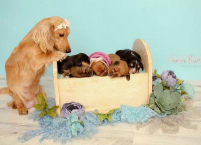8 dumnych psich mam ze szczeniakami!