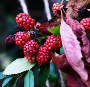 Osia: come autumn