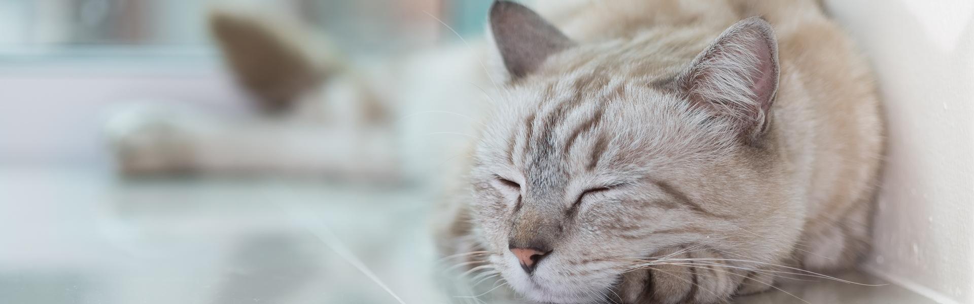 Mój wpis na stronie głównej gazeta.pl oraz portal dla każdego miłośnika zwierząt!