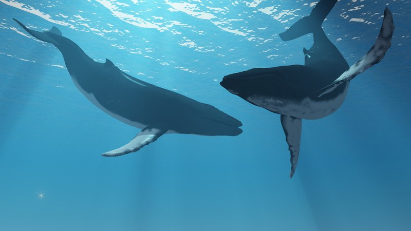 Japonia wznawia polowania na wieloryby!