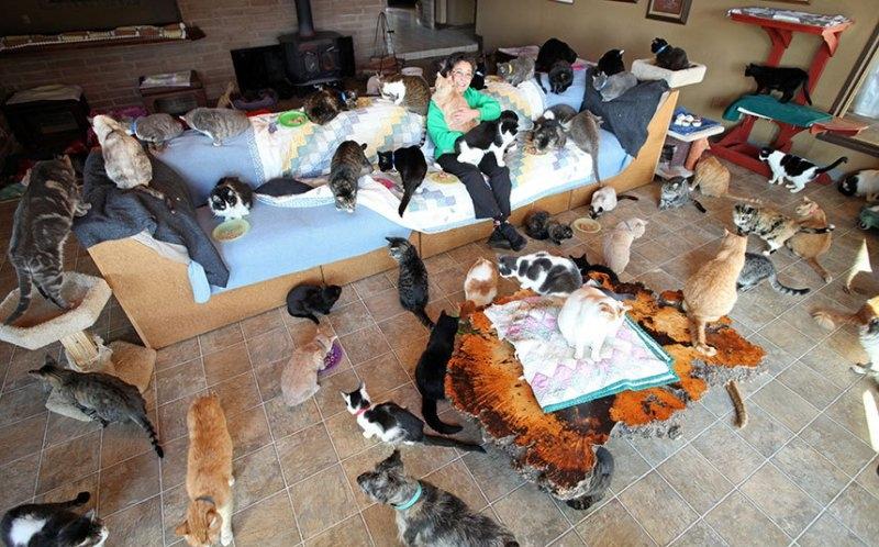 Znalezione obrazy dla zapytania kobieta z kotami