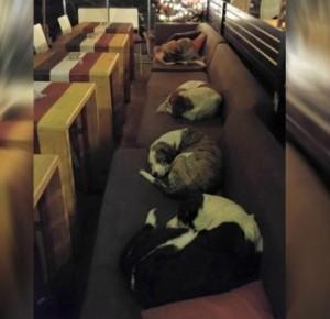 Kawiarnia co noc otwiera się dla bezdomnych psów. Wszystko po to, żeby mogły przenocować w cieple!