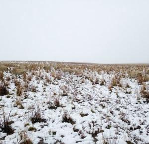 Na tym zdjęciu jest 550 owiec. Potrafisz je znaleźć?